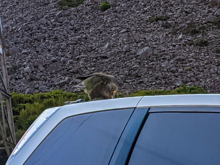 Kea on top of a car at the Otira Viaduct Lookout