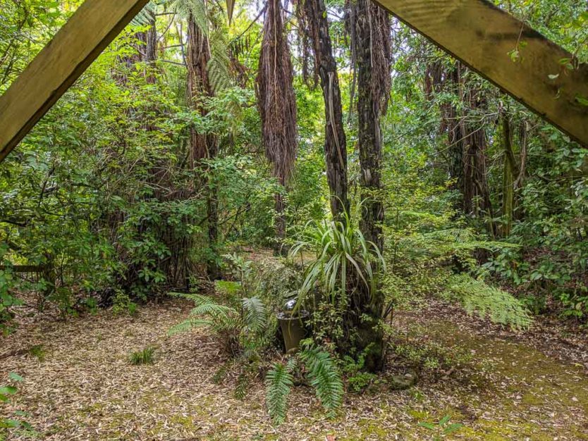 looking out towards the sanctuary from the porch of our sustainably built jungle hut style accommodations near rotorua at Mount Tutu Eco-Sanctuary