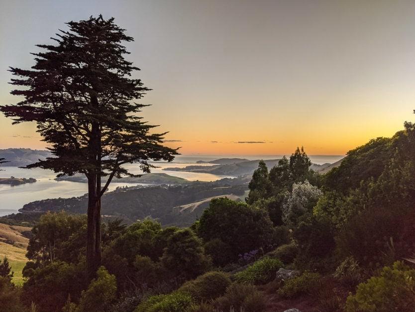 dunedin new zeland otago peninsula sunrise