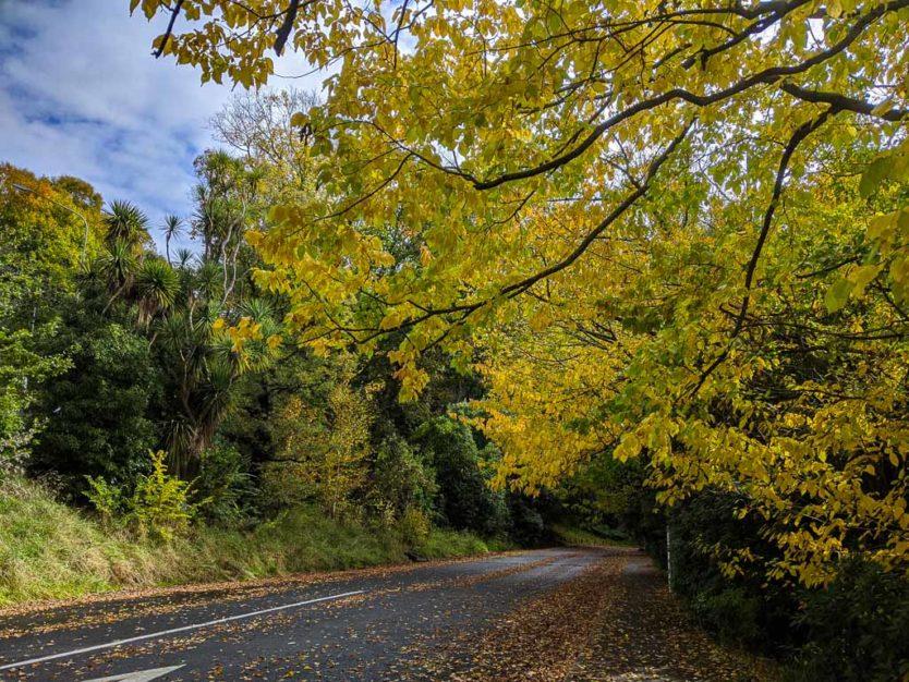 dunedin in autumn