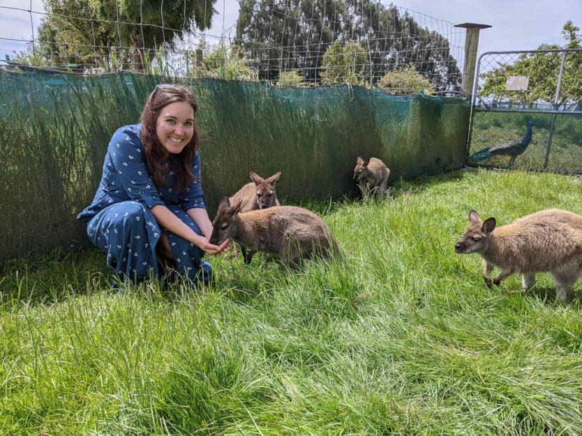 waimate wallaby park new zealand