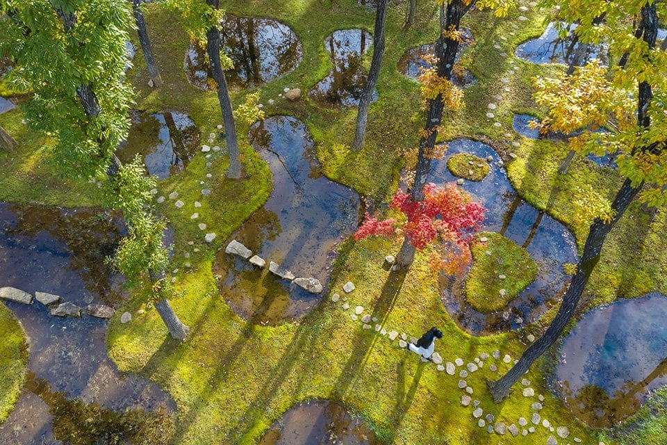 p. 198 Junya Ishigami – Botanical Garden Art Biotop / Water Garden, Nasu, Tochigi, Japan, 2018 Copyright: © Iwan Baan
