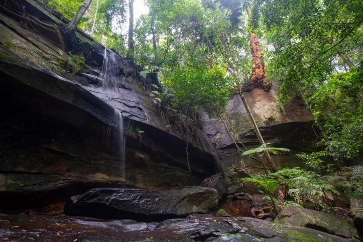 strickland forest falls