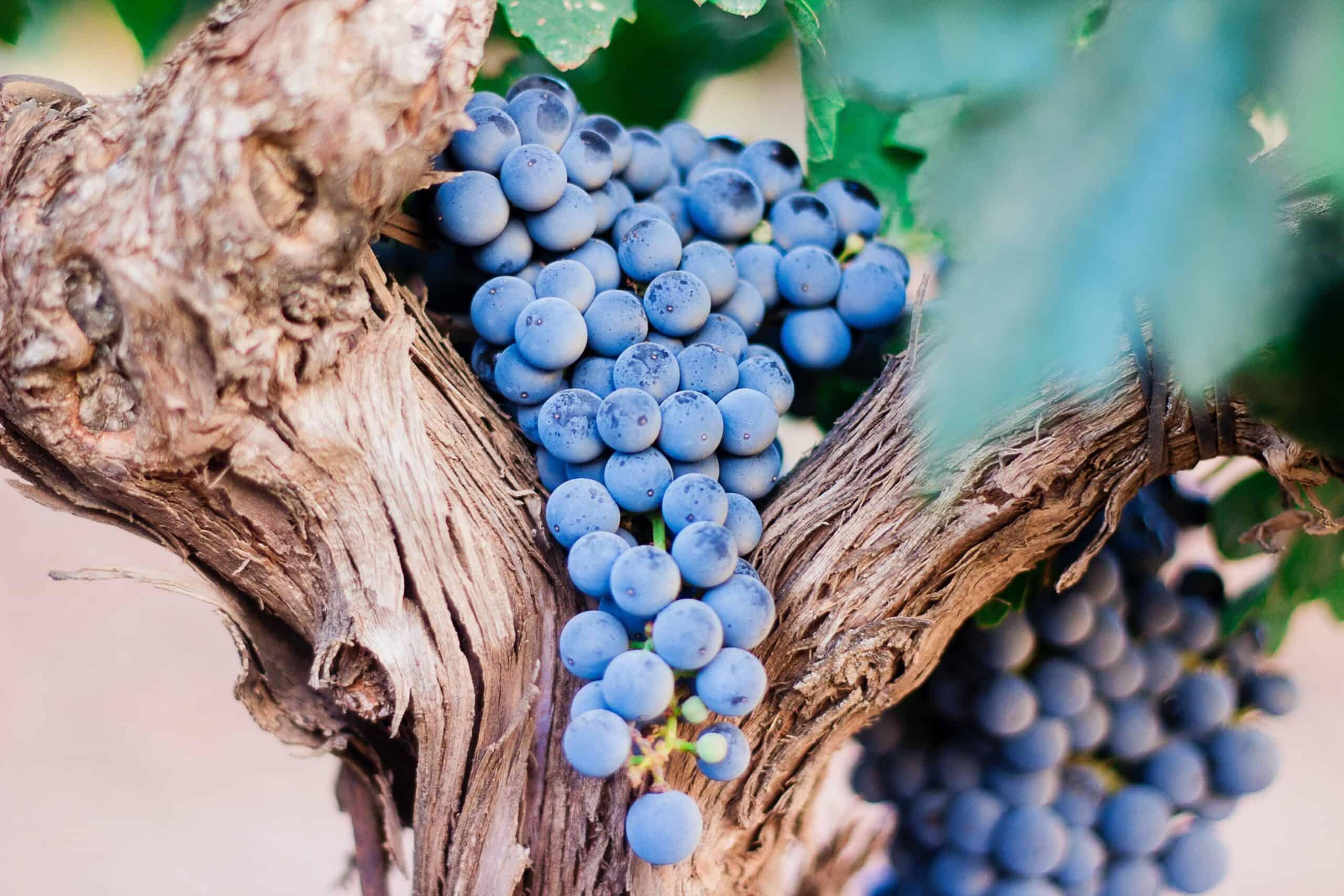 sulfiter i vin