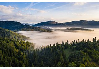 las w górach z poranną mgłą