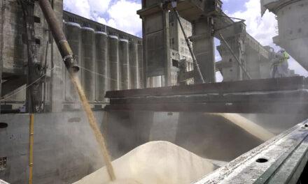 El sector del transporte de granos redujo un 50% la actividad durante el paro