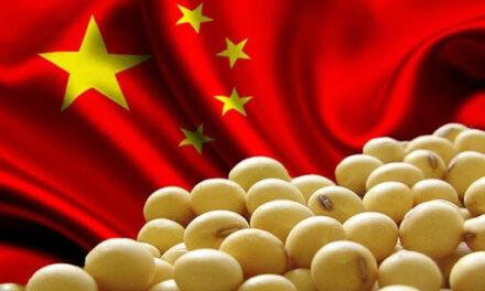 China, un mercado con perspectivas gigantes para las exportaciones argentinas