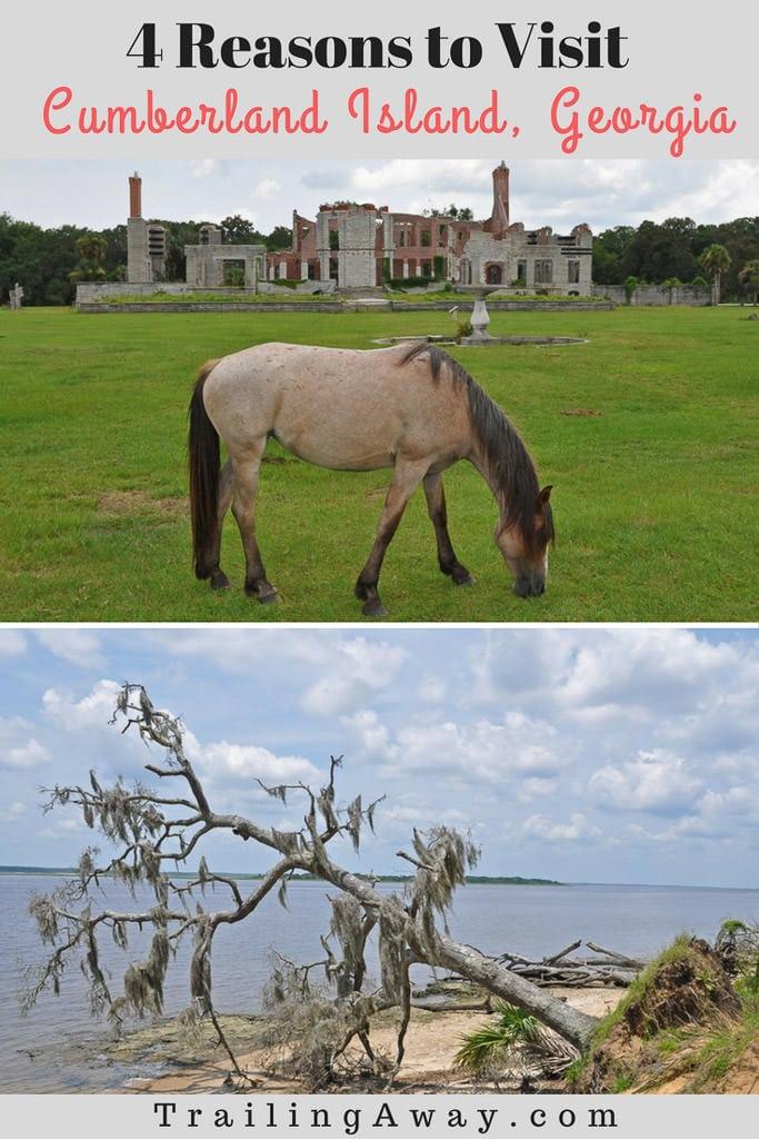 4 Reasons to Visit Cumberland Island, Georgia