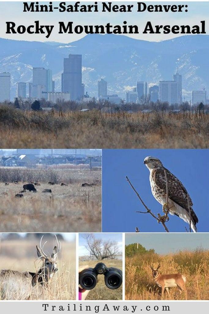 Rocky Mountain Arsenal: A Colorado Mini-Safari