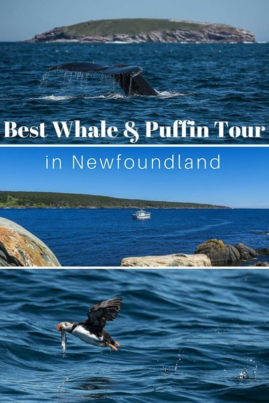 The Best Puffin & Whale Watching Tour in Newfoundland