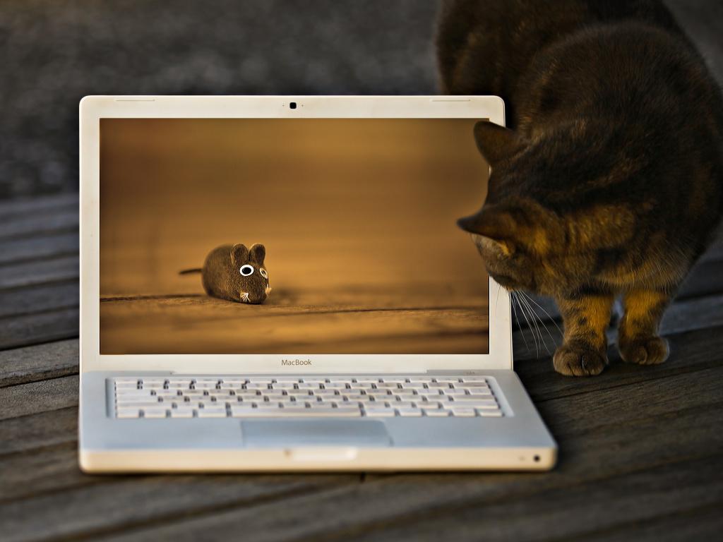 Sposoby sohranenija kartinok na MacBook