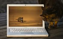 Как сохранять изображения из интернета на MacBook