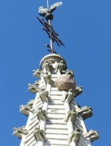 Attaque de frelon asiatique en Vendée, aux Achards