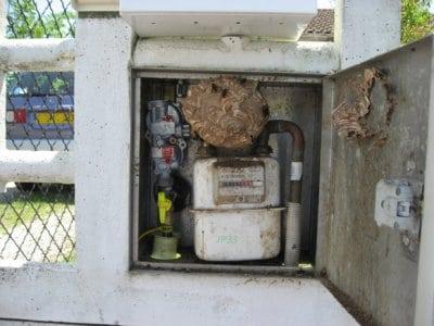 présence d'un nid de guêpes ou de frelons dans un compteur de gaz