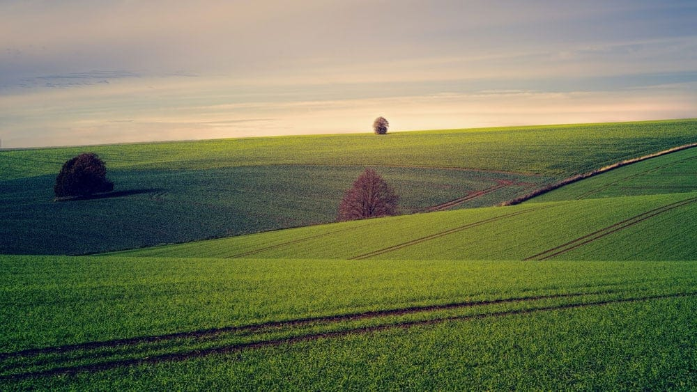 fields at sunset