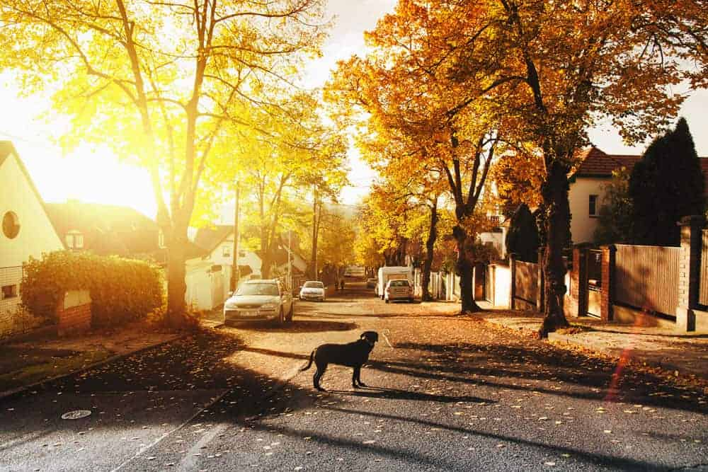 Photo of a dog walking on the street at sunset