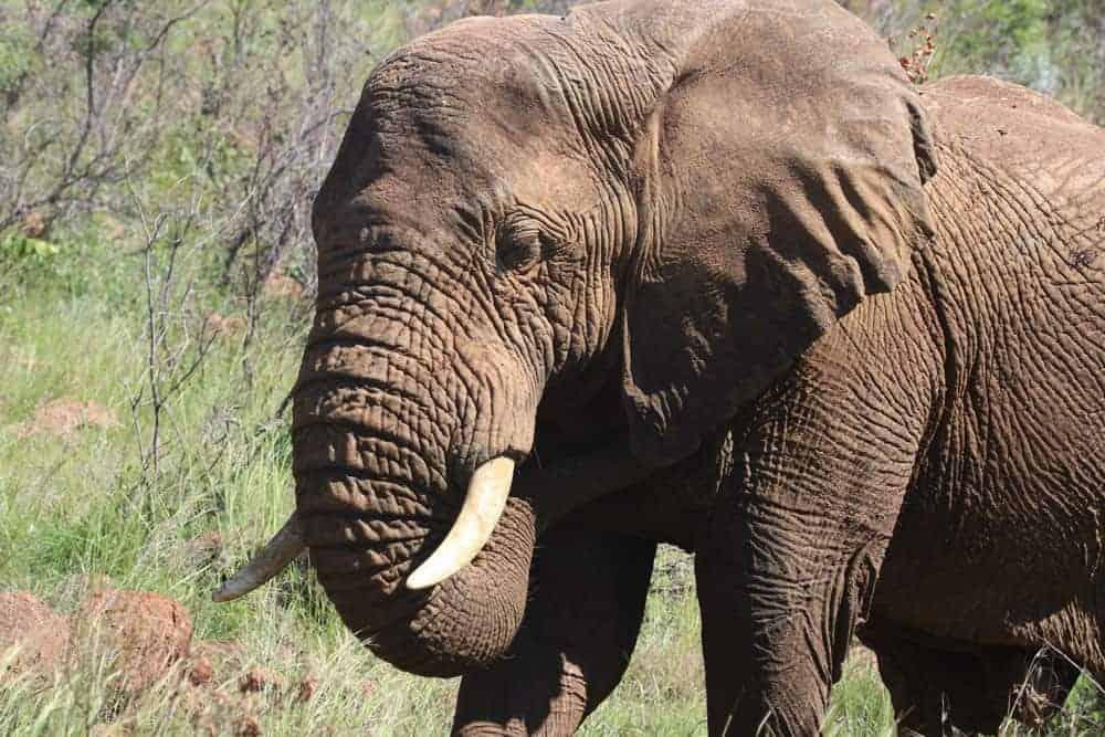 Texture Photography elephant