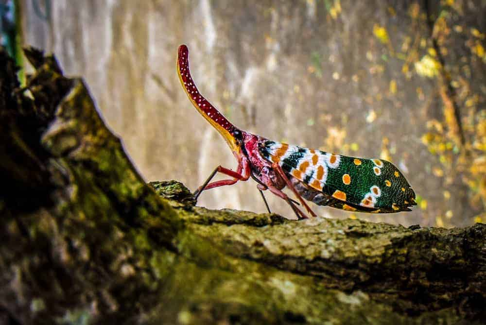 macro photography of colorful insect with blurry background