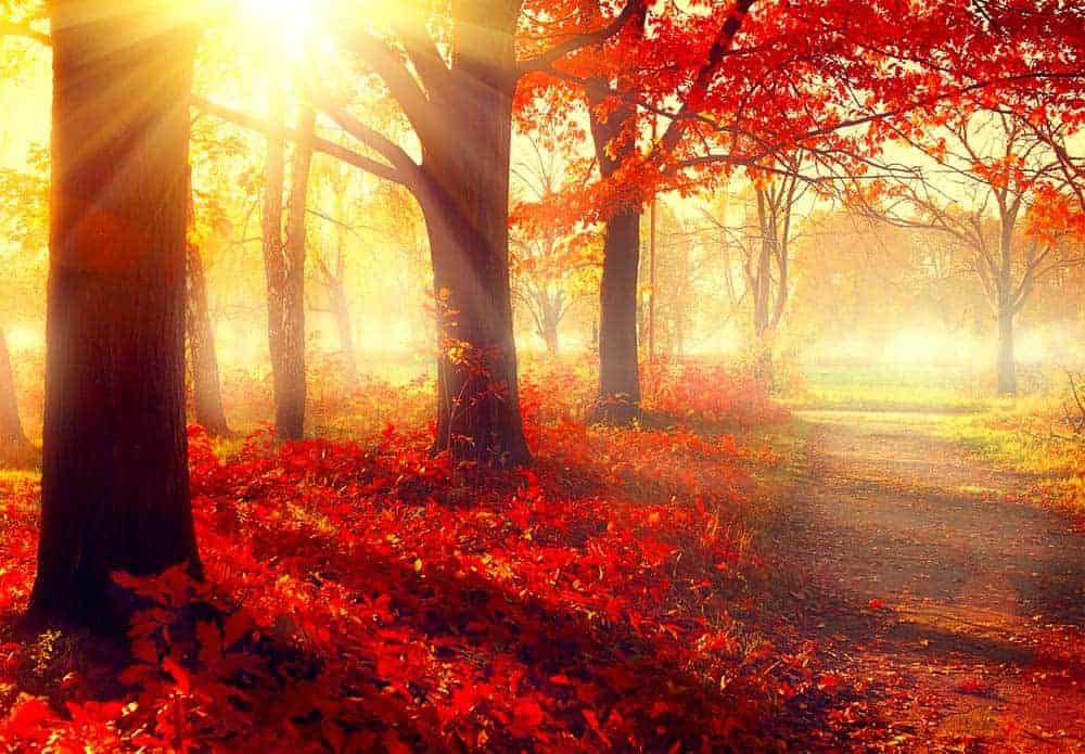 Trees autumn colors