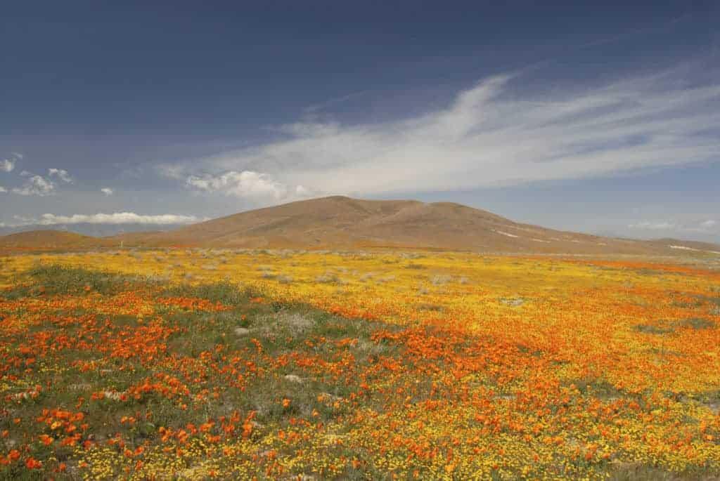 Antelope Valley California Poppy Reserve.