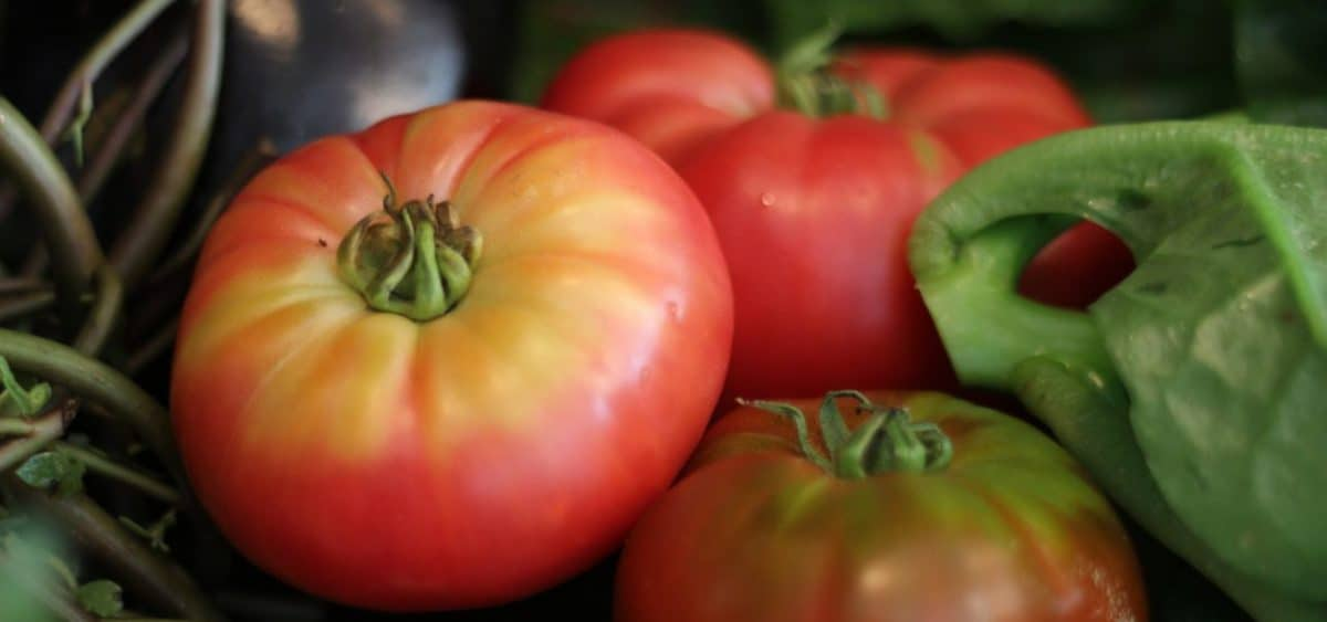 provence food tomatoes