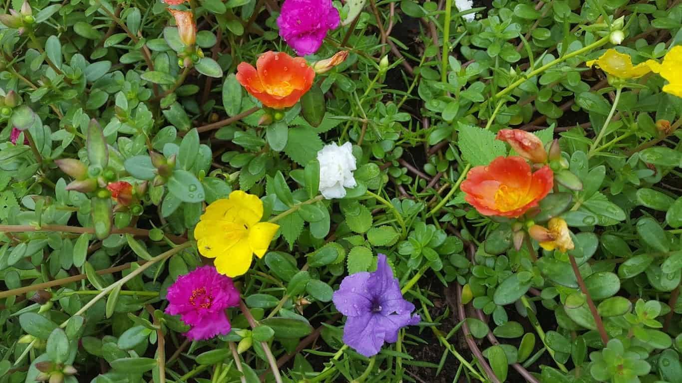 Plantas con flores de colores