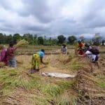 Msaranga rice fields