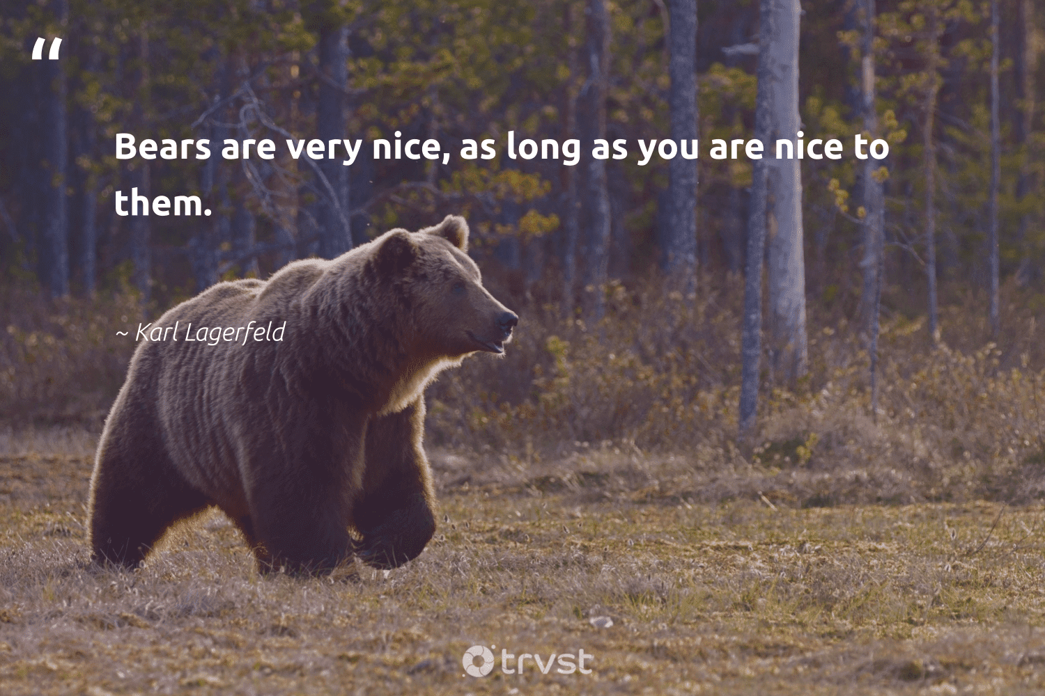 """""""Bears are very nice, as long as you are nice to them.""""  - Karl Lagerfeld #trvst #quotes #bears #bear #collectiveaction #amazingworld #ecoconscious #wildlifeprotection #socialchange #majesticwildlife #dosomething #splendidanimals"""
