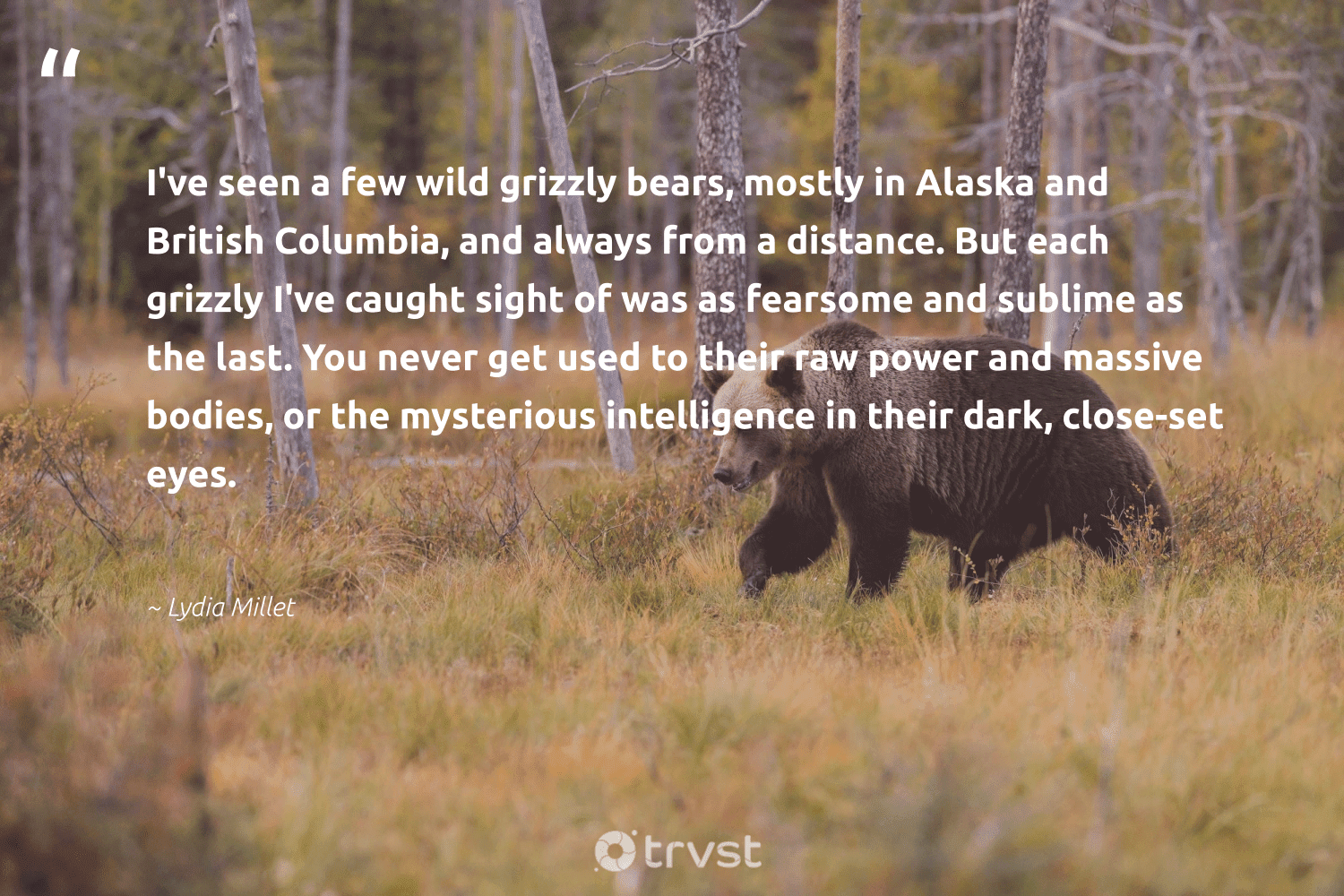 """""""I've seen a few wild grizzly bears, mostly in Alaska and British Columbia, and always from a distance. But each grizzly I've caught sight of was as fearsome and sublime as the last. You never get used to their raw power and massive bodies, or the mysterious intelligence in their dark, close-set eyes.""""  - Lydia Millet #trvst #quotes #wild #bears #protectnature #thinkgreen #bearlove #collectiveaction #wildlifeprotection #beinspired #amazingworld #changetheworld"""
