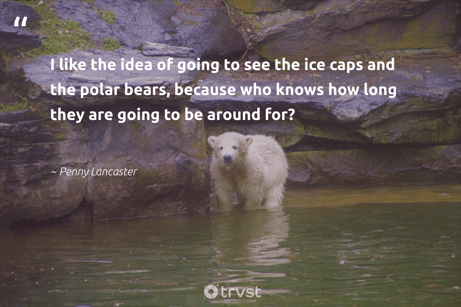 """""""I like the idea of going to see the ice caps and the polar bears, because who knows how long they are going to be around for?""""  - Penny Lancaster #trvst #quotes #bears #biodiversity #ecoconscious #majesticwildlife #dotherightthing #protectnature #dosomething #splendidanimals #changetheworld #amazingworld"""