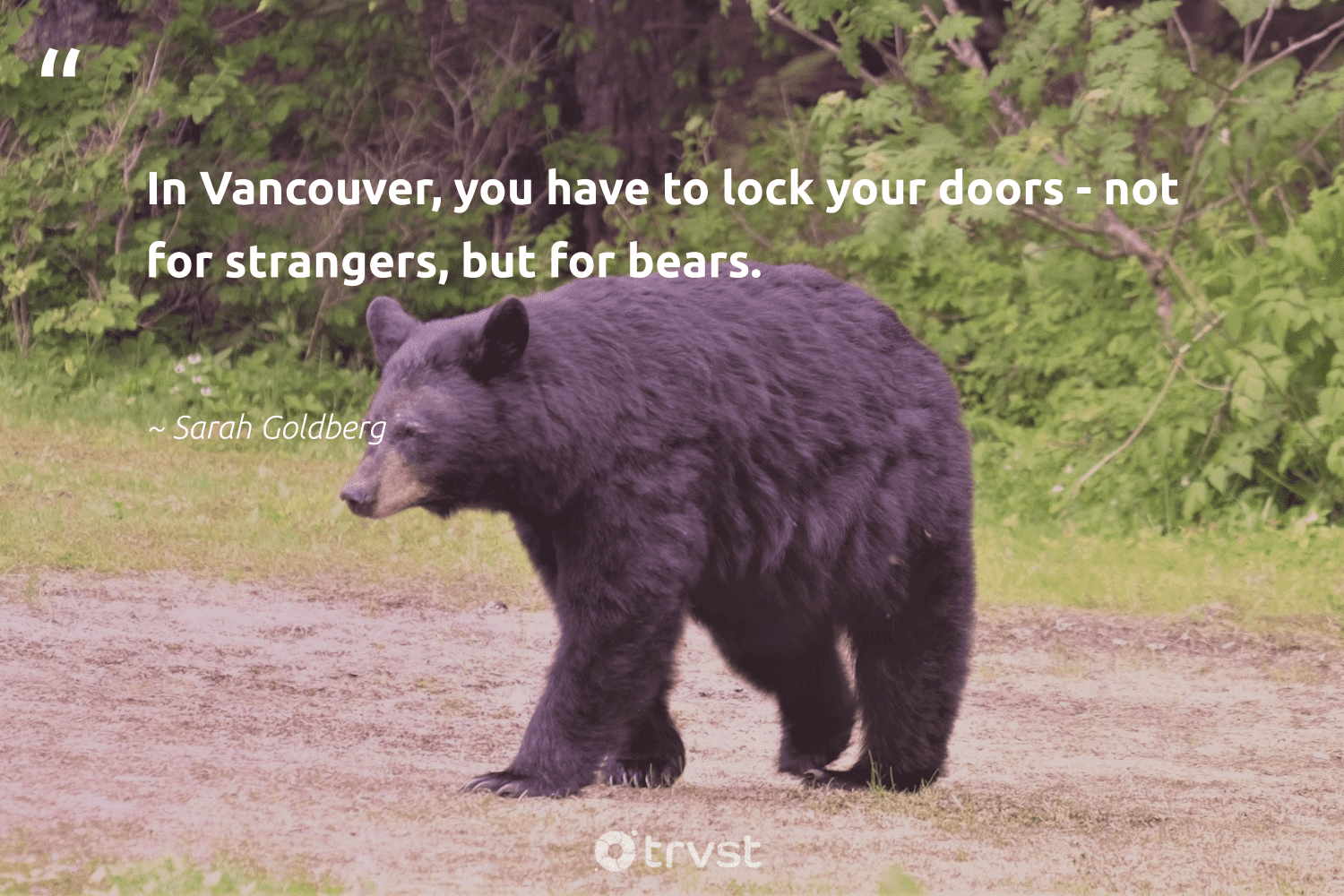 """""""In Vancouver, you have to lock your doors - not for strangers, but for bears.""""  - Sarah Goldberg #trvst #quotes #bears #bear #collectiveaction #majesticwildlife #dogood #conservation #takeaction #bearlove #changetheworld #biodiversity"""