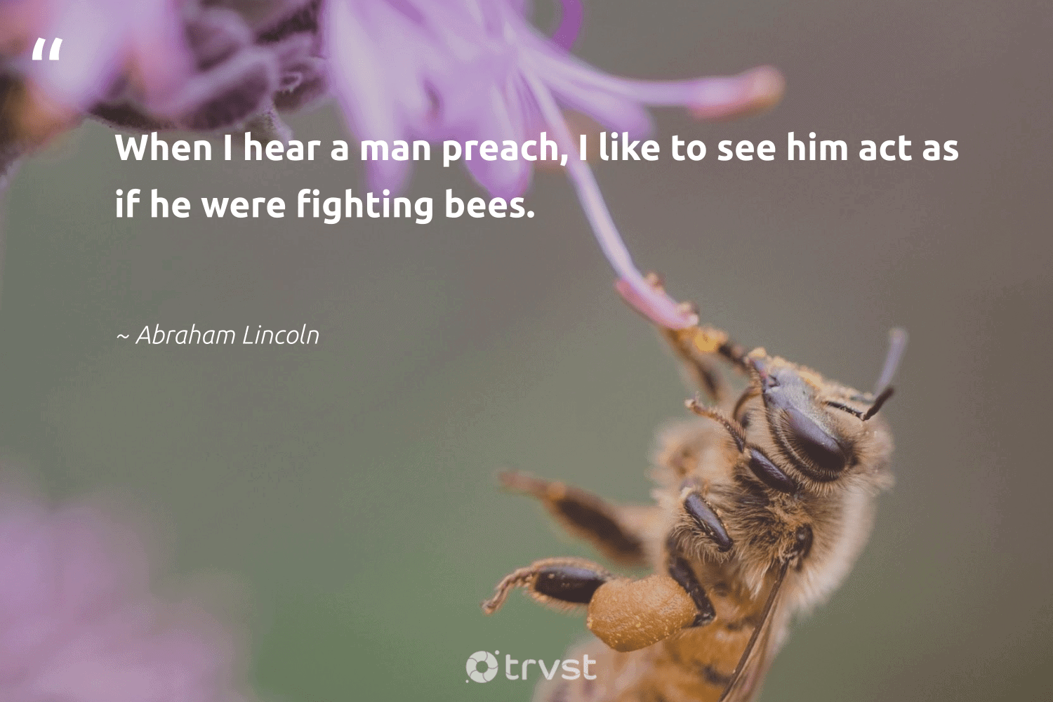 """""""When I hear a man preach, I like to see him act as if he were fighting bees.""""  - Abraham Lincoln #trvst #quotes #bees #savethebees #pollinators #biology #gogreen #beekeeping #insects #geology #collectiveaction #beeswax"""
