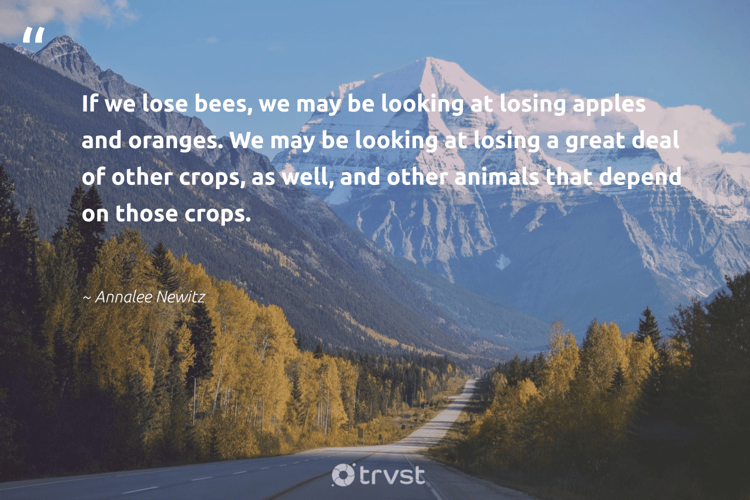 """""""If we lose bees, we may be looking at losing apples and oranges. We may be looking at losing a great deal of other crops, as well, and other animals that depend on those crops.""""  - Annalee Newitz #trvst #quotes #animals #bees #animallovers #flowers #biology #collectiveaction #animal #pollinators #nature #changetheworld"""