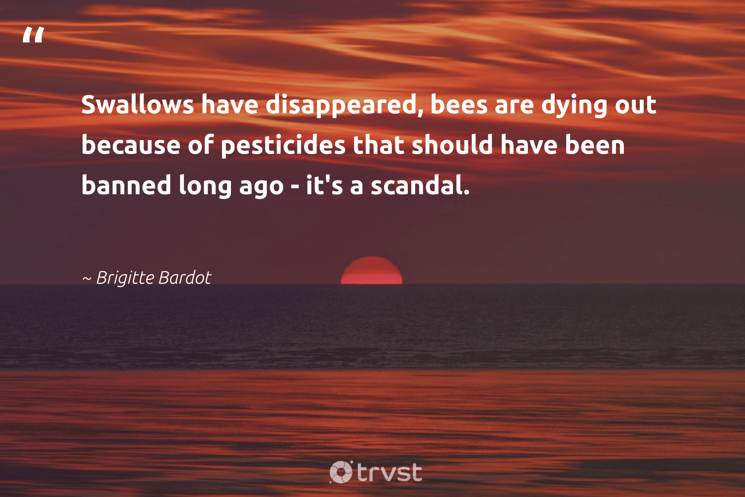 """""""Swallows have disappeared, bees are dying out because of pesticides that should have been banned long ago - it's a scandal.""""  - Brigitte Bardot #trvst #quotes #bees #beeswax #pollinators #natural #changetheworld #savethebees #nature #biology #socialchange #beekeeping"""