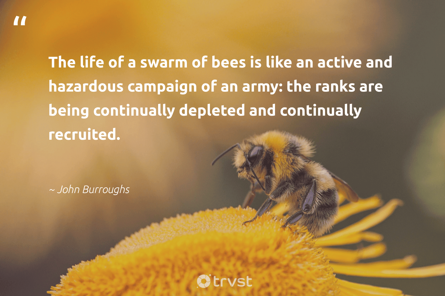 """""""The life of a swarm of bees is like an active and hazardous campaign of an army: the ranks are being continually depleted and continually recruited.""""  - John Burroughs #trvst #quotes #bees #honeybee #flowers #nature #planetearthfirst #beekeepers #bee #geology #ecoconscious #beekeeper"""