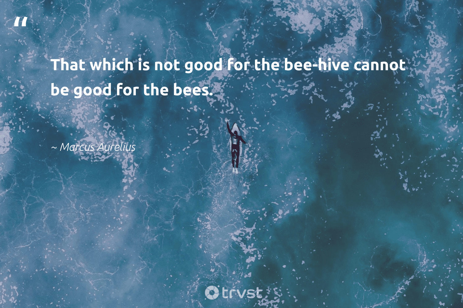 """""""That which is not good for the bee-hive cannot be good for the bees.""""  - Marcus Aurelius #trvst #quotes #bee #bees #honey #beekeeper #beehive #geology #collectiveaction #beekeepers #honeybee #pollen"""