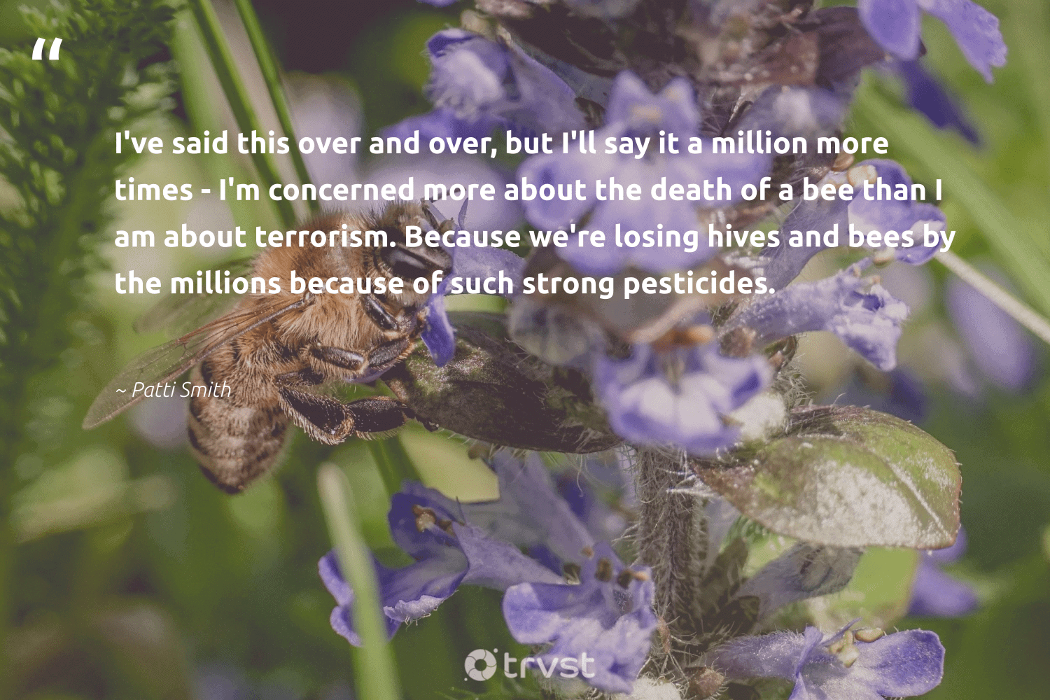 """""""I've said this over and over, but I'll say it a million more times - I'm concerned more about the death of a bee than I am about terrorism. Because we're losing hives and bees by the millions because of such strong pesticides.""""  - Patti Smith #trvst #quotes #bee #bees #beekeeping #beekeeper #apiary #natural #changetheworld #beekeepers #beeswax #honeybee"""