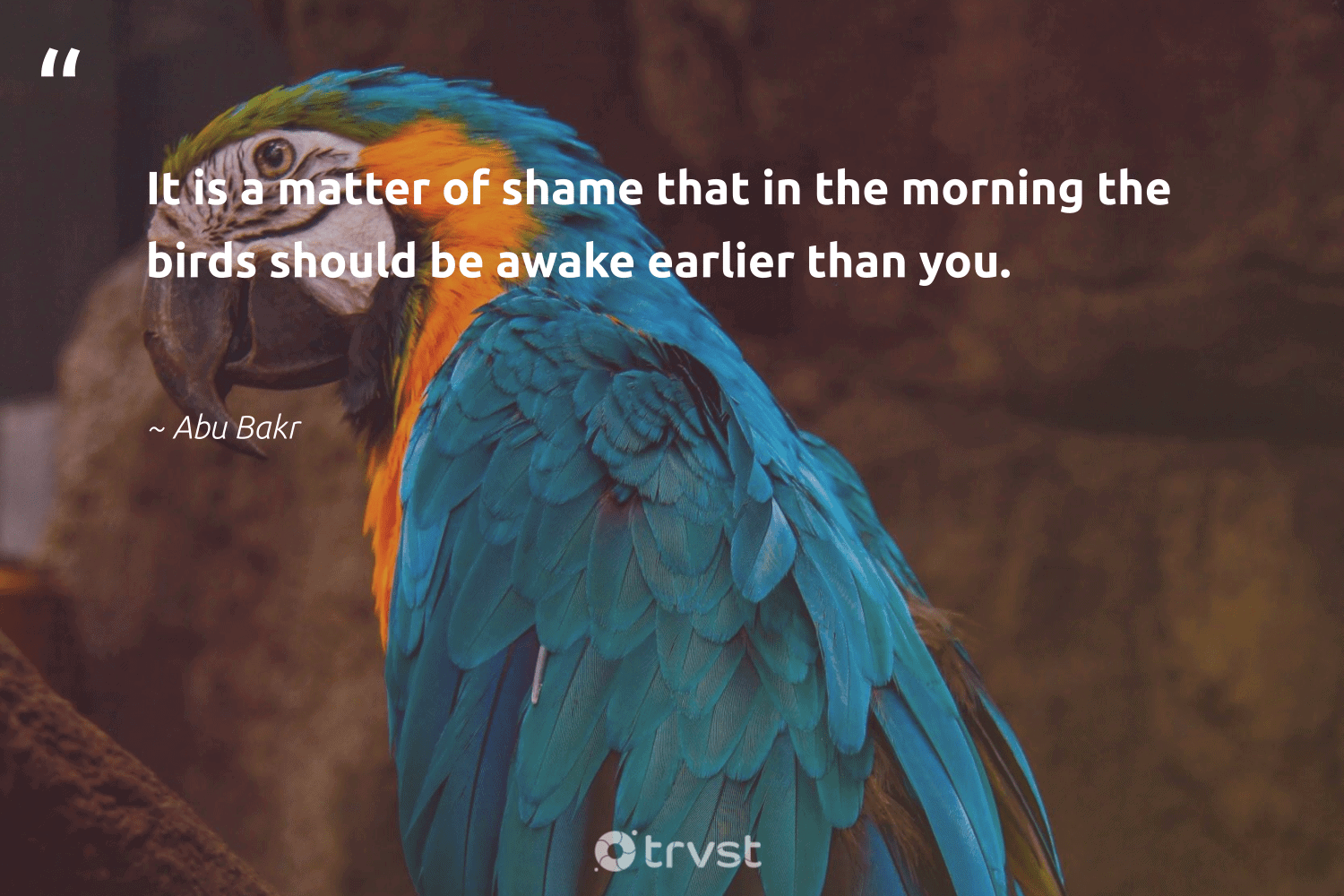 """""""It is a matter of shame that in the morning the birds should be awake earlier than you.""""  - Abu Bakr #trvst #quotes #birds #bird #biology #gogreen #natural #impact #nature #thinkgreen #forscience #socialimpact"""