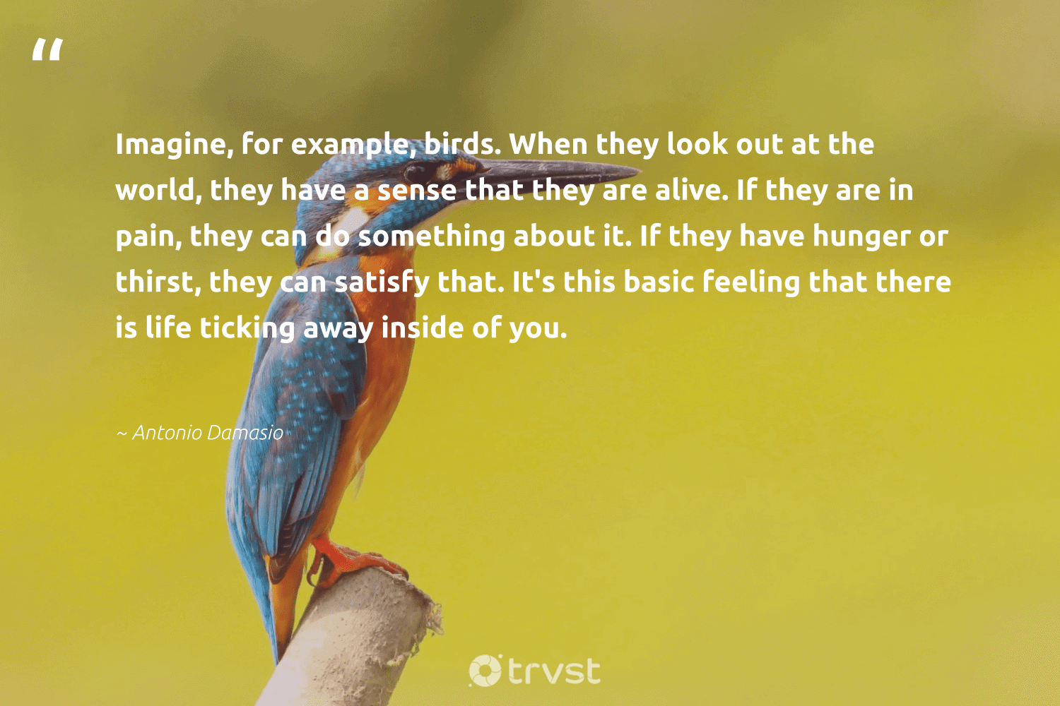 """""""Imagine, for example, birds. When they look out at the world, they have a sense that they are alive. If they are in pain, they can do something about it. If they have hunger or thirst, they can satisfy that. It's this basic feeling that there is life ticking away inside of you.""""  - Antonio Damasio #trvst #quotes #dosomething #birds #hunger #bird #geology #bethechange #natural #thinkgreen #forscience #dogood"""