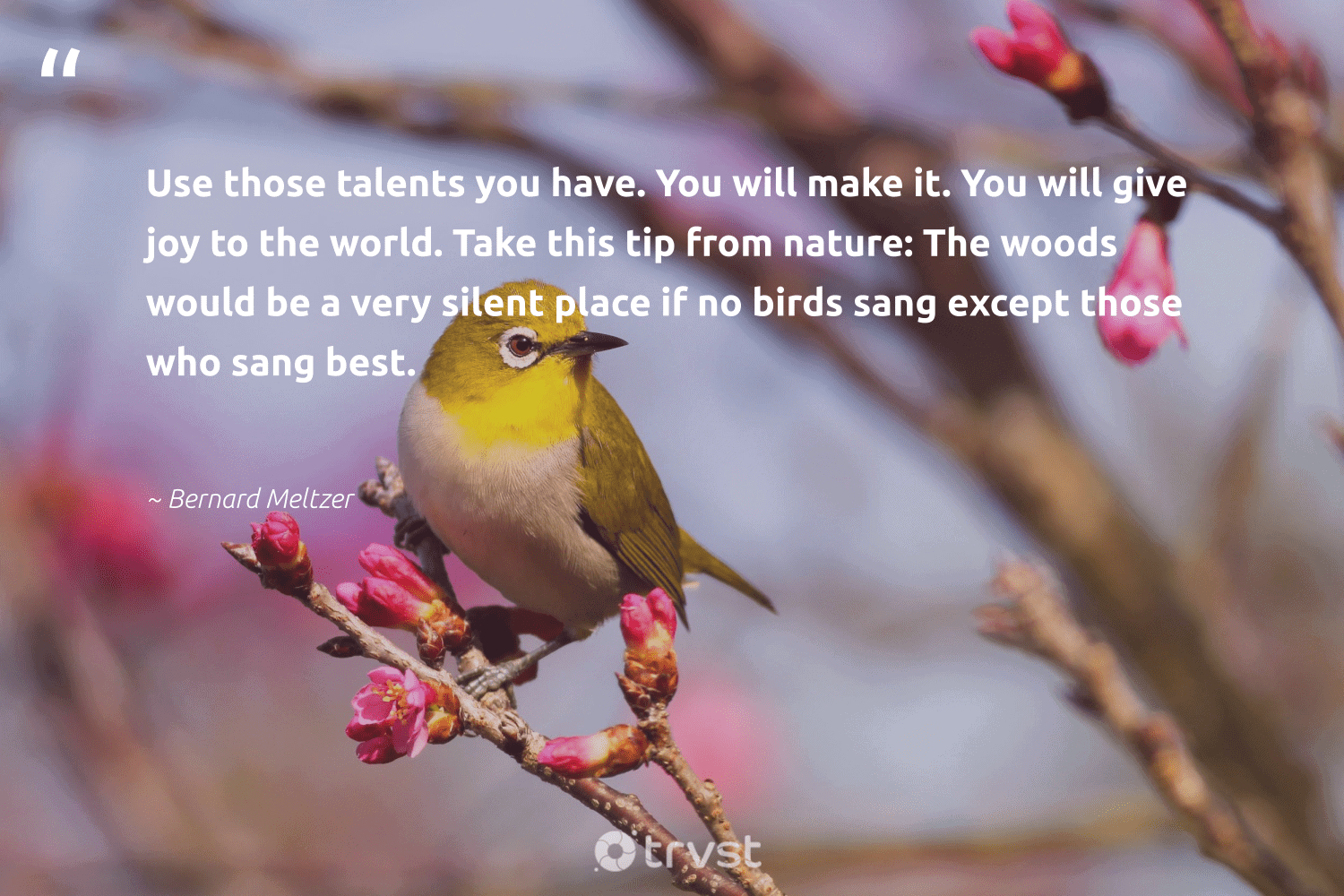 """""""Use those talents you have. You will make it. You will give joy to the world. Take this tip from nature: The woods would be a very silent place if no birds sang except those who sang best.""""  - Bernard Meltzer #trvst #quotes #birds #bird #geology #bethechange #forscience #dotherightthing #natural #changetheworld #biology #dogood"""