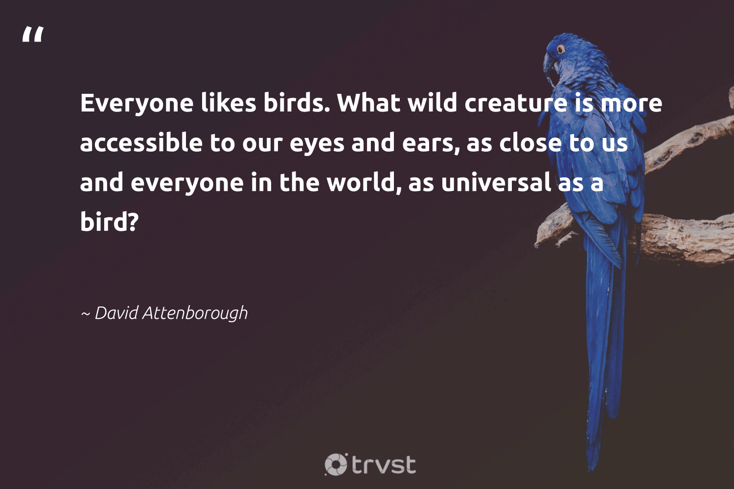 """""""Everyone likes birds. What wild creature is more accessible to our eyes and ears, as close to us and everyone in the world, as universal as a bird?""""  - David Attenborough #trvst #quotes #birds #bird #geology #collectiveaction #forscience #ecoconscious #biology #dosomething #natural #changetheworld"""