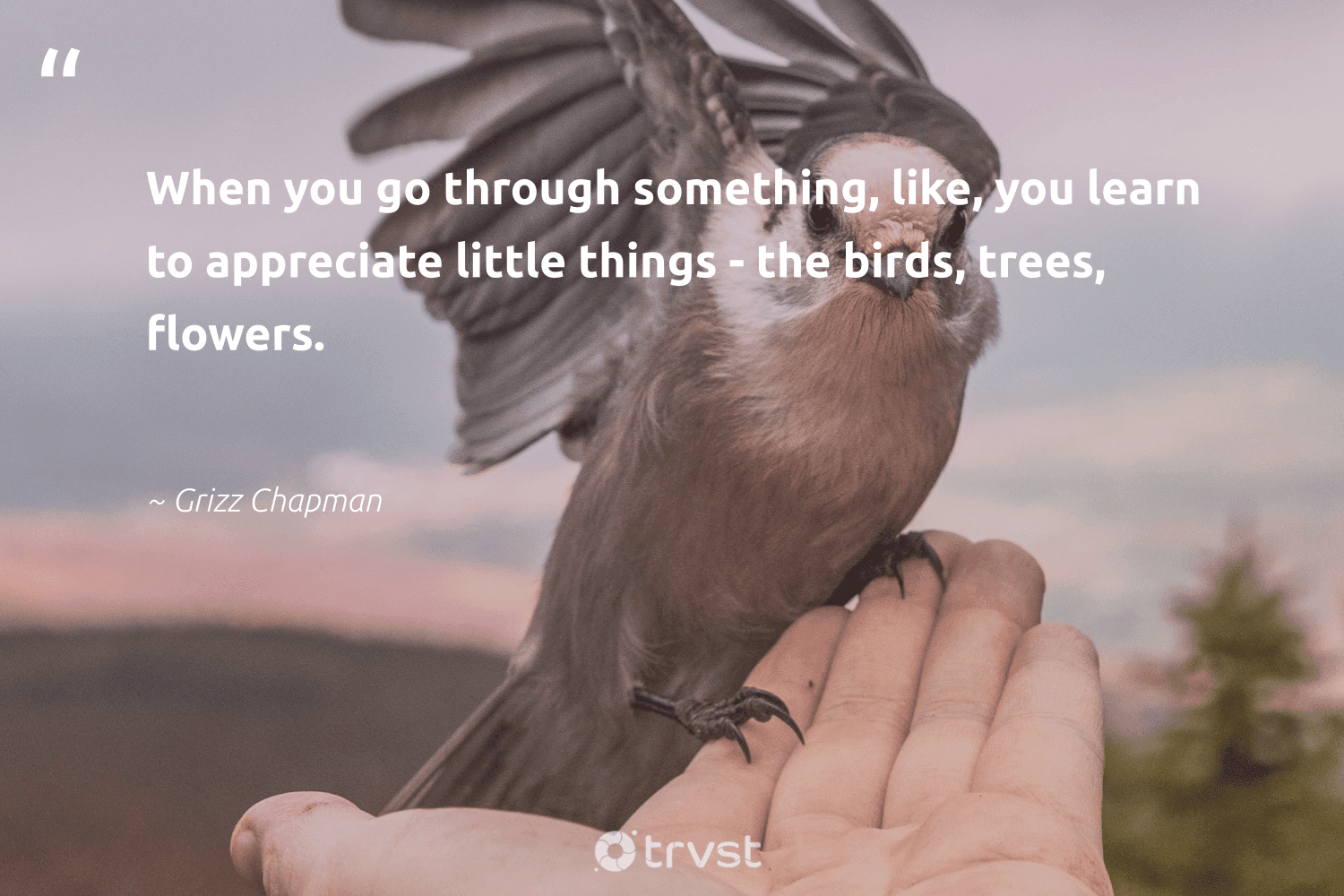 """""""When you go through something, like, you learn to appreciate little things - the birds, trees, flowers.""""  - Grizz Chapman #trvst #quotes #trees #flowers #birds #weplanttrees #savetheplanet #beinspired #rainforest #sustainability #socialchange #forest"""