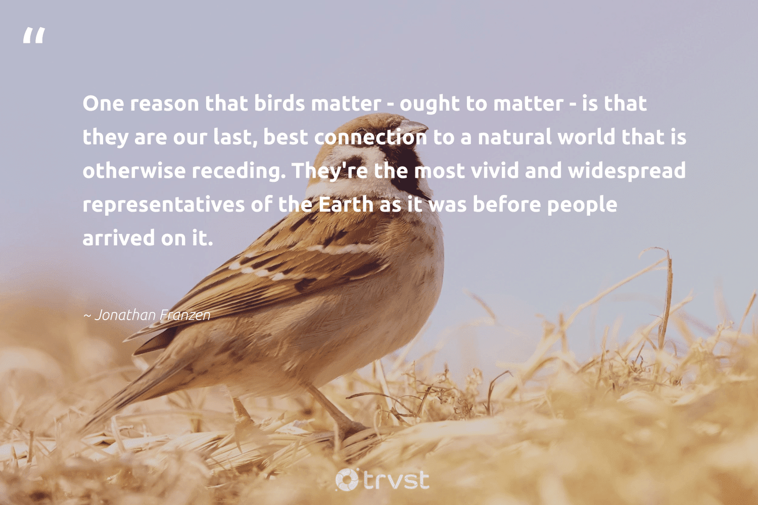 """""""One reason that birds matter - ought to matter - is that they are our last, best connection to a natural world that is otherwise receding. They're the most vivid and widespread representatives of the Earth as it was before people arrived on it.""""  - Jonathan Franzen #trvst #quotes #earth #natural #birds #nature #volunteer #dotherightthing #planet #naturelovers #impact #conservation"""