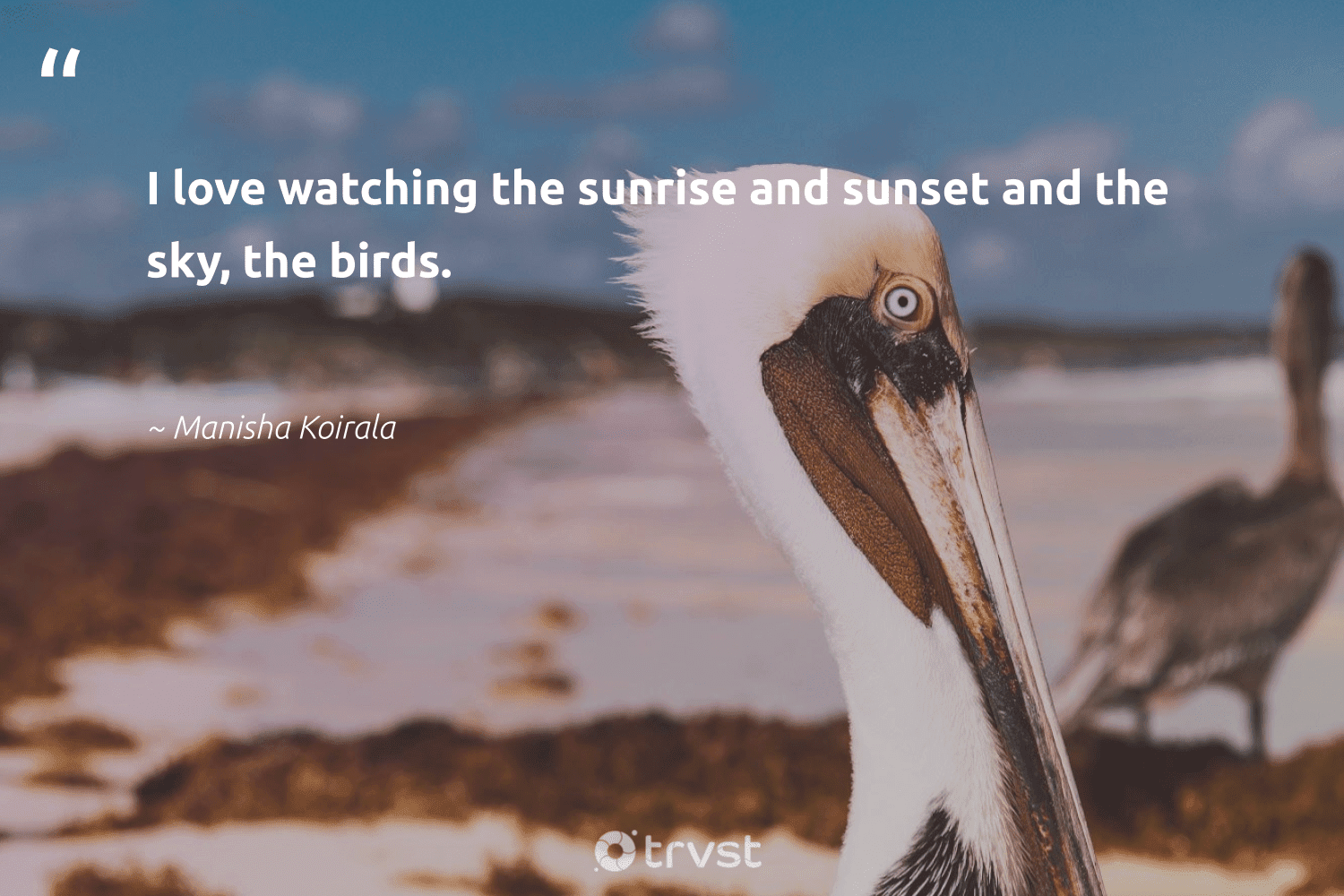 """""""I love watching the sunrise and sunset and the sky, the birds.""""  - Manisha Koirala #trvst #quotes #love #sunset #birds #bird #nature #takeaction #biology #gogreen #geology #beinspired"""