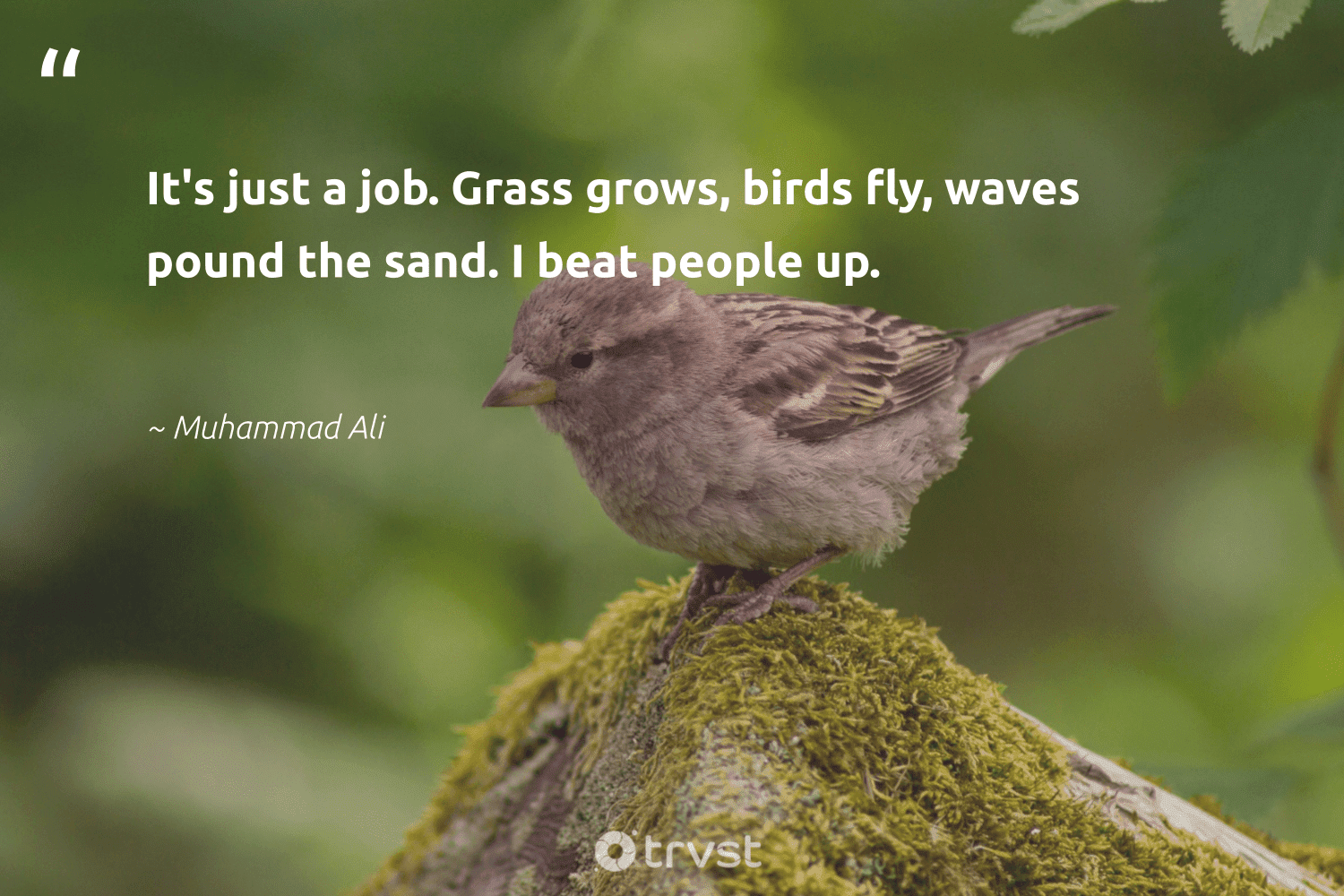 """""""It's just a job. Grass grows, birds fly, waves pound the sand. I beat people up.""""  - Muhammad Ali #trvst #quotes #waves #sand #birds #bird #biology #dotherightthing #natural #ecoconscious #nature #bethechange"""