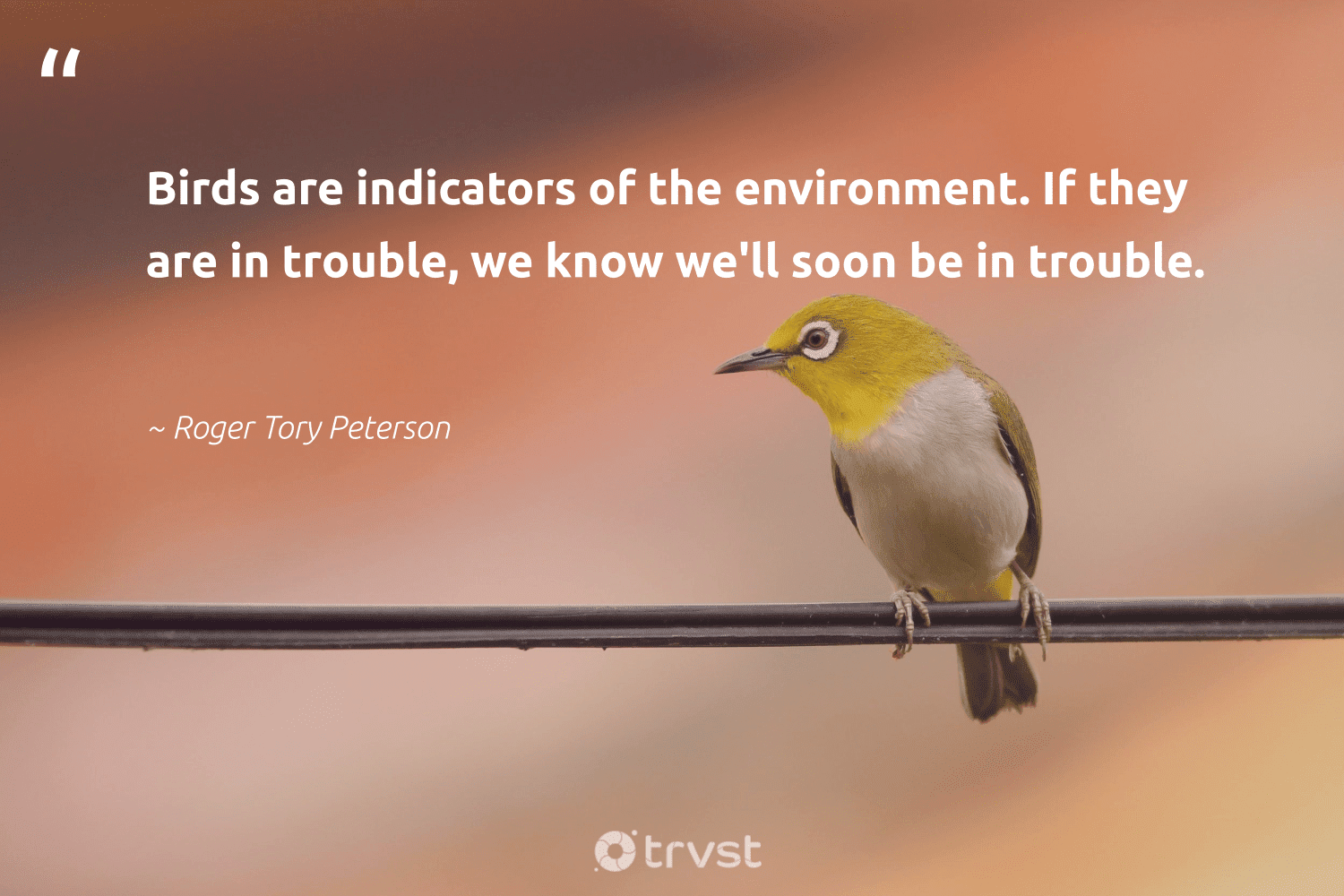 """""""Birds are indicators of the environment. If they are in trouble, we know we'll soon be in trouble.""""  - Roger Tory Peterson #trvst #quotes #environment #birds #earth #ecofriendly #changetheworld #nature #climatechange #impact #conservation #eco"""