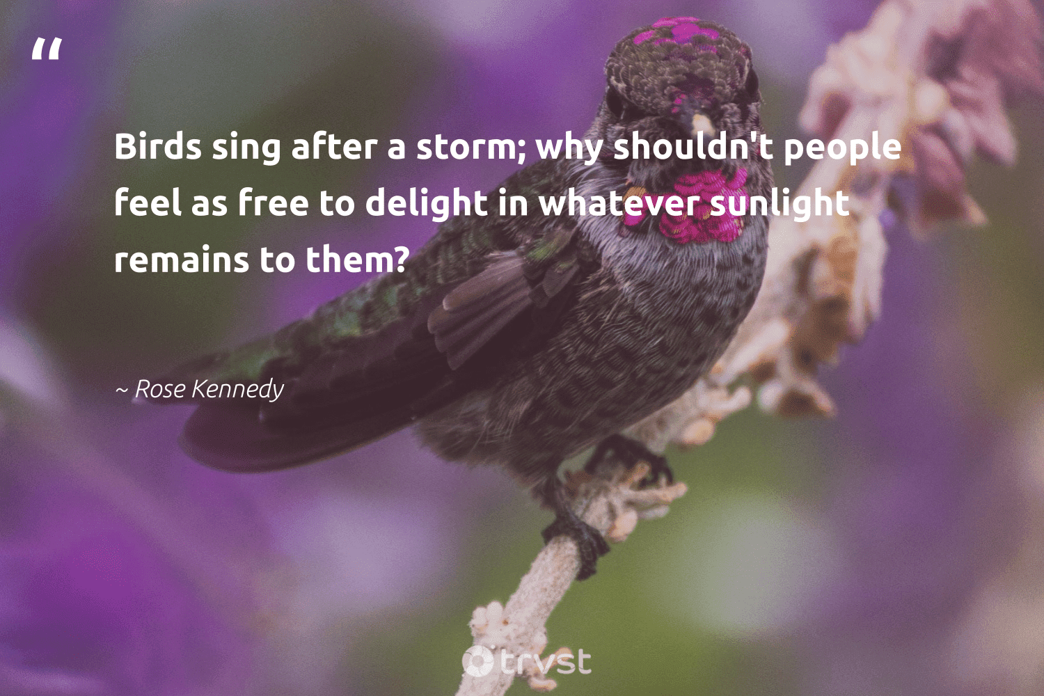 """""""Birds sing after a storm; why shouldn't people feel as free to delight in whatever sunlight remains to them?""""  - Rose Kennedy #trvst #quotes #birds #bird #biology #dogood #geology #beinspired #forscience #dosomething #natural #collectiveaction"""