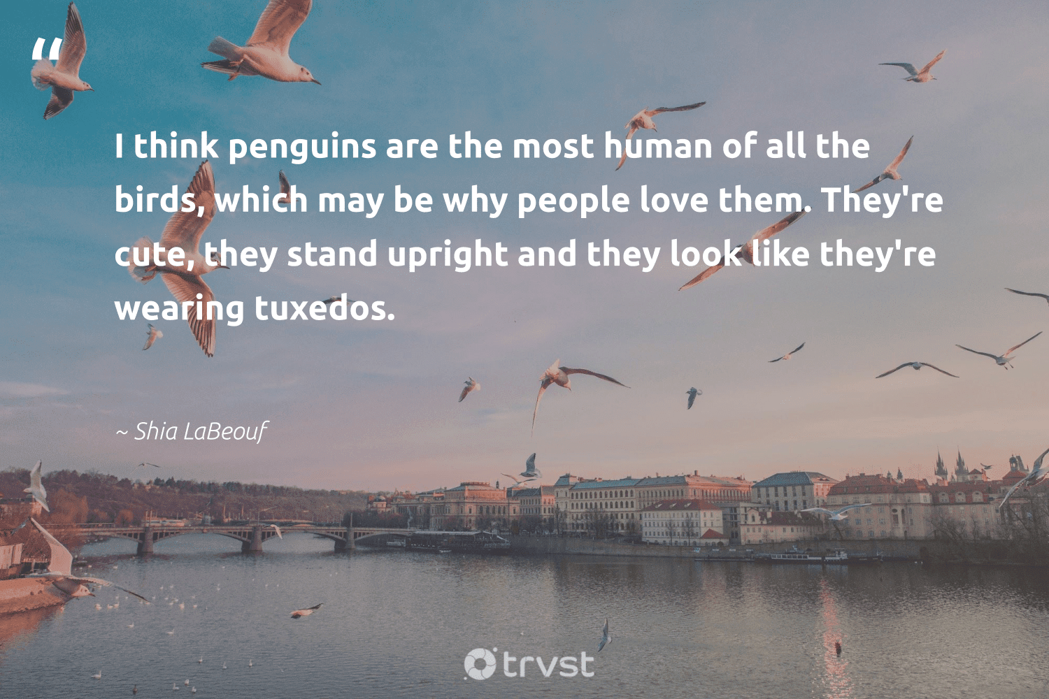 """""""I think penguins are the most human of all the birds, which may be why people love them. They're cute, they stand upright and they look like they're wearing tuxedos.""""  - Shia LaBeouf #trvst #quotes #love #birds #bird #geology #takeaction #nature #dotherightthing #forscience #collectiveaction #biology"""