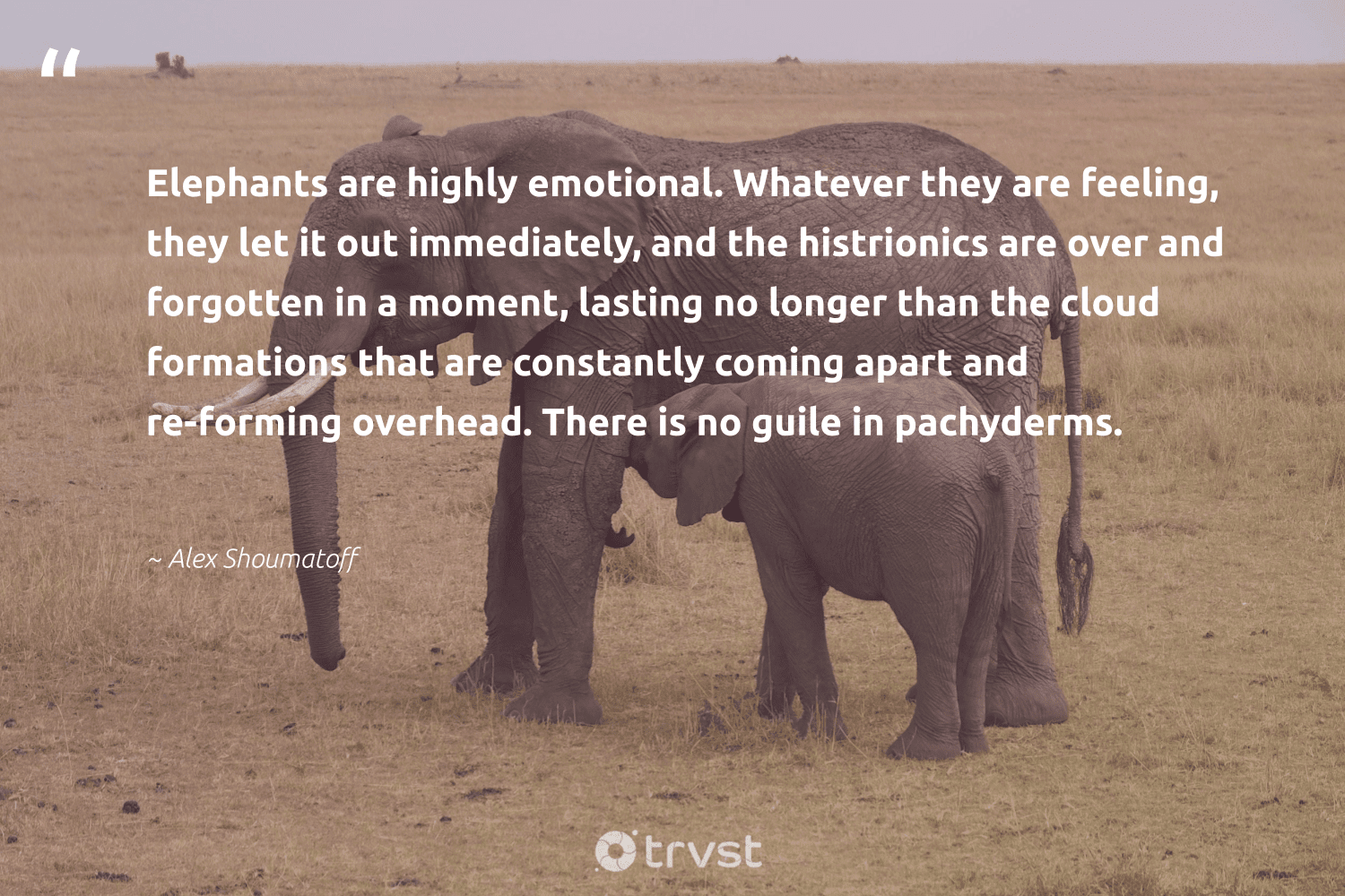 """""""Elephants are highly emotional. Whatever they are feeling, they let it out immediately, and the histrionics are over and forgotten in a moment, lasting no longer than the cloud formations that are constantly coming apart and re-forming overhead. There is no guile in pachyderms.""""  - Alex Shoumatoff #trvst #quotes #elephants #endangered #planetearthfirst #naturelovers #bethechange #elephant #dotherightthing #animals #collectiveaction #wildanimals"""