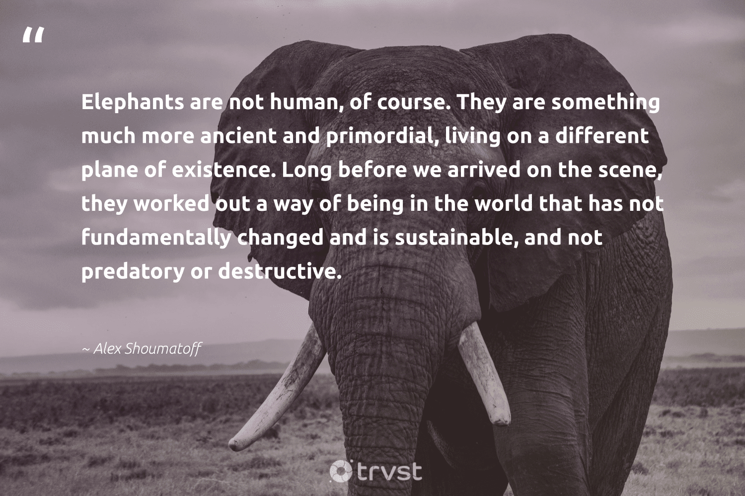 """""""Elephants are not human, of course. They are something much more ancient and primordial, living on a different plane of existence. Long before we arrived on the scene, they worked out a way of being in the world that has not fundamentally changed and is sustainable, and not predatory or destructive.""""  - Alex Shoumatoff #trvst #quotes #sustainable #elephants #sustainability #savetheelephants #green #takeaction #ecofriendly #mammals #gogreen #bethechange"""